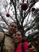 Fremantle : sous l'arbre de noël de la ville
