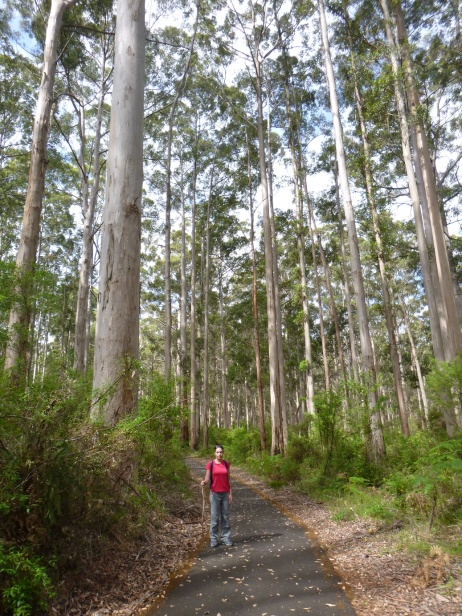 Pemberton - Gloucester National Park