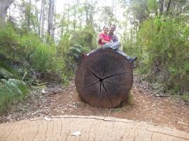 Un tronc tellement grand qu'il fallait immortaliser ce moment