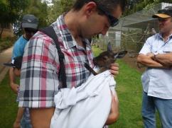 Ferme d'Alpagas de Denmark - Bébé kangourou