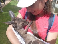 Ferme d'Alpagas de Denmark - Bébé kangourou 2