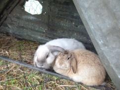 24. lapins