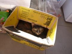 36. Catbox