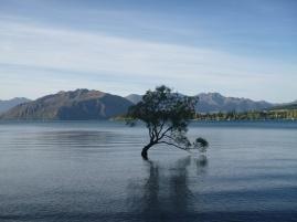 31. Wanaka et son arbre dans le lac