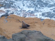52. Moeraki - Le chant du seal
