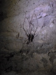 69. Waitomo caves9 - Weta