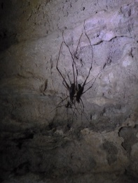 69. Waitomo caves9 - Weta