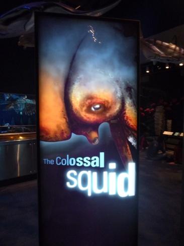 7. Te Papa museum - Le calmar géant (unique espèce de cette taille capturée au monde !!)