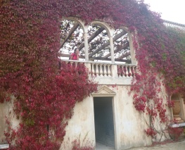 78. Hamilton gardens - Italie2 - Juliette