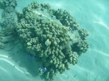 60. Moment snorkeling3