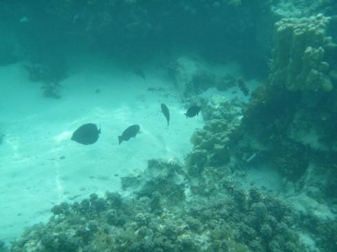61. Moment snorkeling4