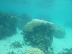 62. Moment snorkeling5