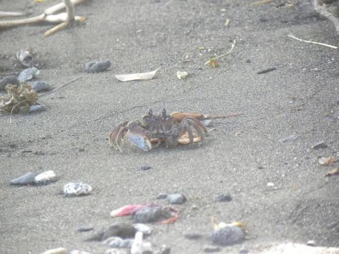 66. Crabe