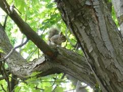 11. Premier écureuil canadien du voyage