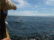 67. Les Bergeronnes -Excursion baleines