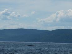 68. Les Bergeronnes -Excursion baleines2
