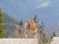 111. Manning park - Cascades lookout