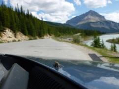 56. Rocheuses - Route des Glaciers