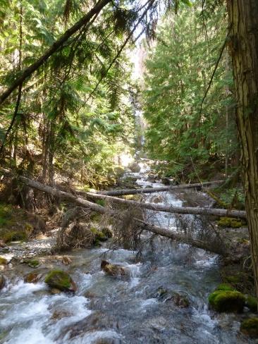 76. Rocheuses - Kootenay - Juniper trail