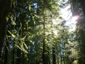 102. Magnifique Cathedral Grove