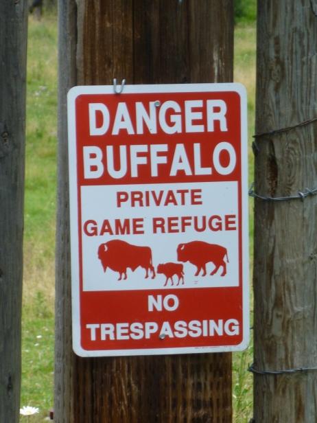 11. Danger buffalo