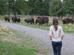 36. Bye bye buffalos