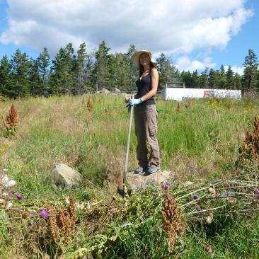 4. ...juste une mauvaise herbe à arracher répandue par milliers sur la propriété !