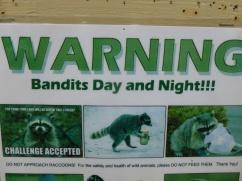 16-avertissement-raccoon