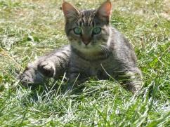 58-un-des-nombreux-chats-allant-et-venant-librement-dans-la-ferme