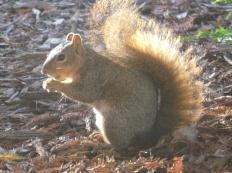 62-des-ecureuils-sont-presents-partout-sur-le-campus
