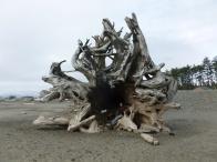 7-des-arbres-immenses-echoues-sur-la-plage