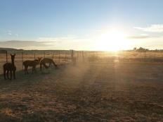 82-un-dernier-lever-de-soleil-avec-les-animaux