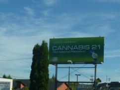 98-oui-le-cannabis-est-legal-ici
