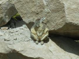 12-nous-croisons-un-gros-lapin-qui-fait-bronzette