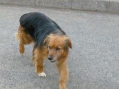 26-le-chili-ou-l-on-retrouve-le-phenomene-des-chiens-errants-comme-a-tahiti