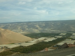 31-vue-sur-la-vallee-fertile-de-lazapa
