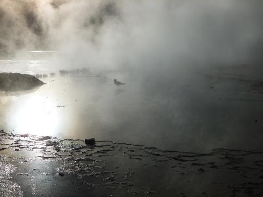 68-geysers-del-tatio4