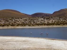 79-un-dernier-cliche-de-flamants-roses-et-nous-rentrons-nous-preparer-pour-notre-depart-en-bolivie