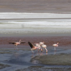 16-flamants-roses