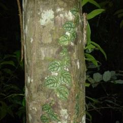 26-decouverte-de-la-faune-amazonienne-ici-une-plante-mortelle-parmi-dautres