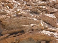 28-arret-pour-observer-les-lapins-du-desert