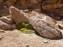 29-une-drole-de-mousse-parvient-a-pousser-dans-cet-environnement-aride