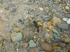 40-certaines-fourmis-sont-juste-immenses