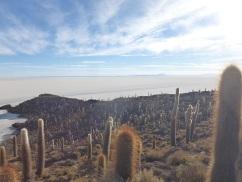 41-une-foret-de-cactus-en-plein-milieu-du-salar