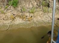 66-lesprit-de-groupe-de-ces-singes-est-fascinant