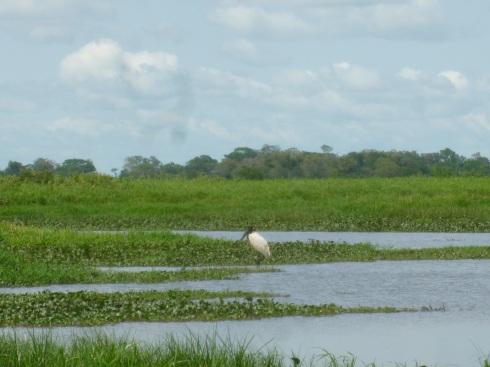 74-au-passage-dans-ces-marais-de-nouvelles-especes-doiseau-a-observer