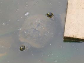 8-les-tortues-de-la-propriete