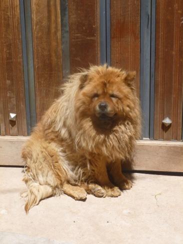 87. Un lion rode dans les rues de la ville...