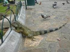 22. Parc aux iguanes