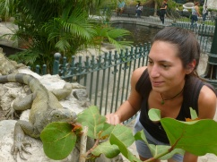 26. Parc aux iguanes5